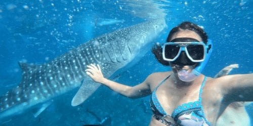 Swiming with whale sharks in oslob as a digital nomad