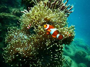Scuba Diving on Gili Trawangan